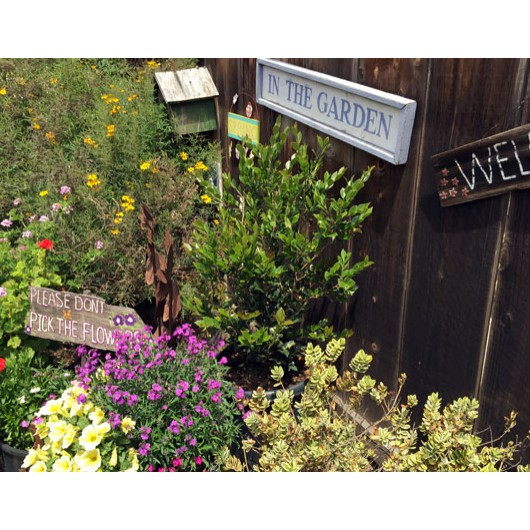 Signs in colorful planting